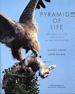 Pyramids of Life: Patterns of Life and Death in the Ecosystem